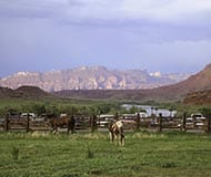 Westwater Canyon Red Cliffs Horses
