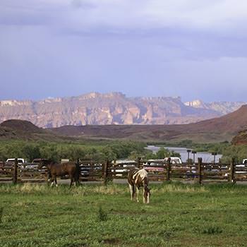 Westwater Multisport Red Cliffs Horses